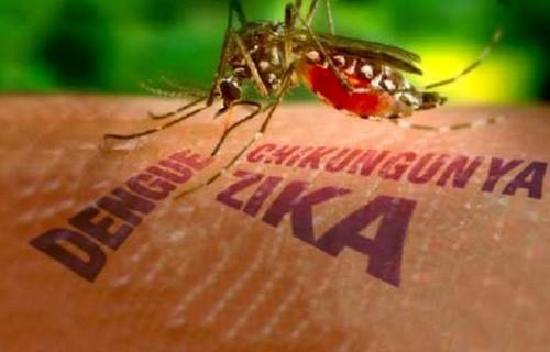 dau-hieu-khac-biet-giua-sot-xuat-huyet-va-benh-do-virus-zika