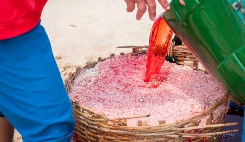 Nhuộm ruốc tại Phú Yên bằng Rhodamine. Ảnh: P.H.