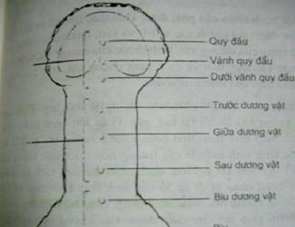 can-benh-vung-kin-te-nhi-cua-ong-vua-phap-2