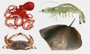 Nhận diện các loại hải sản miền Trung không ăn được