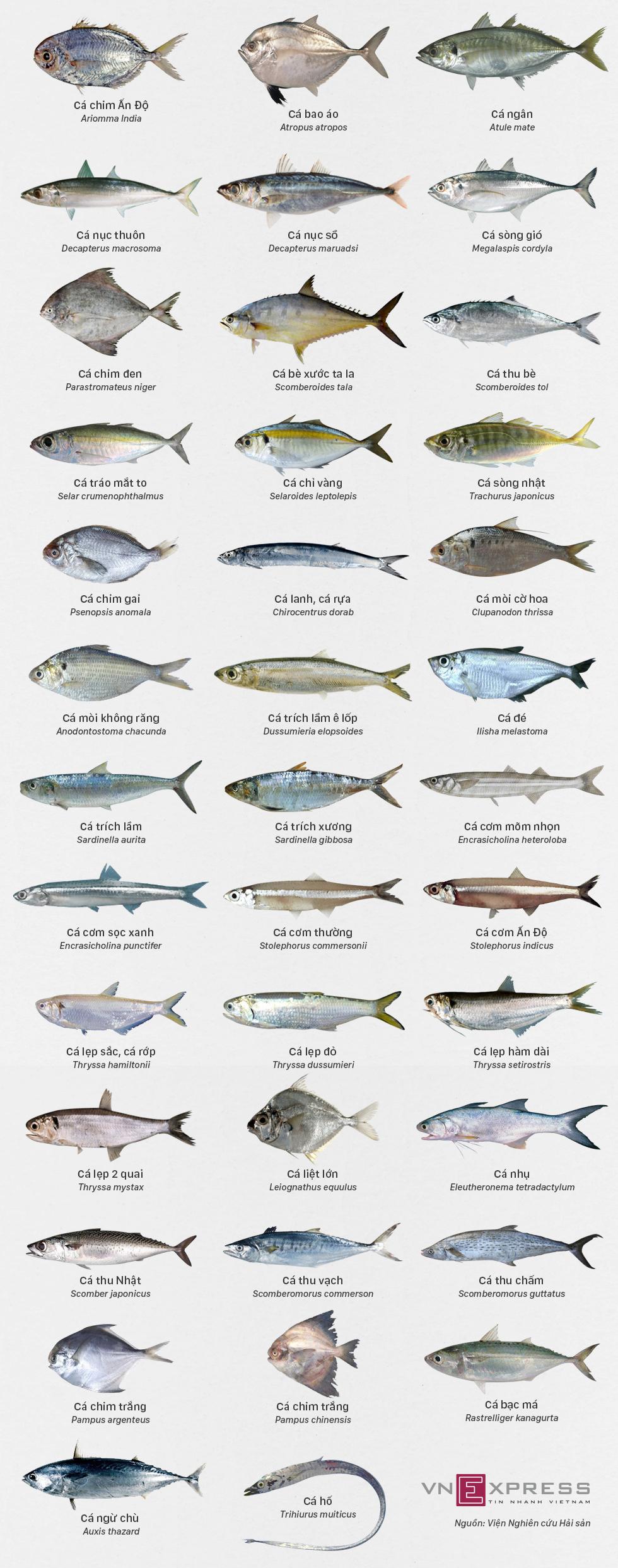 Các loại cá biển miền Trung an toàn để ăn