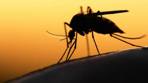 virus-zika-co-the-gay-vo-sinh-cho-phai-manh