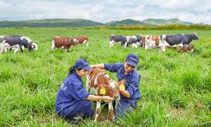 Vinamilk sản xuất sữa tươi hữu cơ chuẩn châu Âu