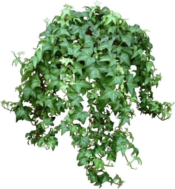 11 cây trồng trong nhà mang lại tài lộc và sức khỏe