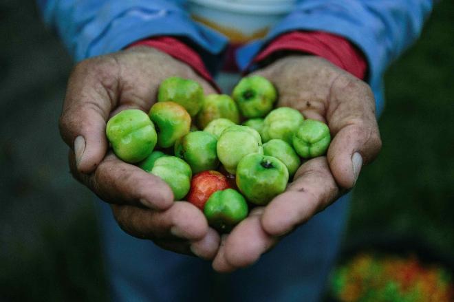 cherry-anh-dao-giau-vitamin-c-nhat-trong-cac-loai-qua