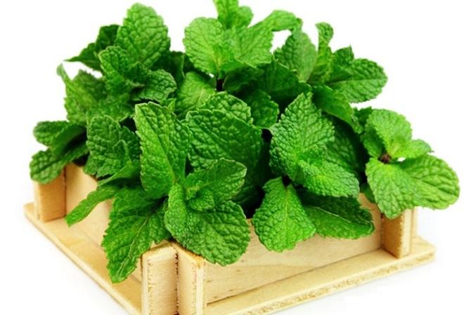 9 loại cây trồng trong nhà làm gia vị và thuốc chữa bệnh