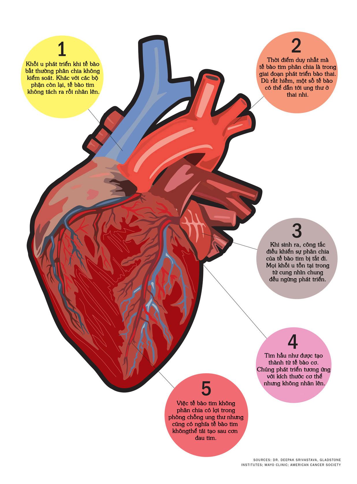 Tại sao con người ít khi bị ung thư tim?