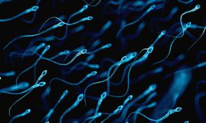 Đàn ông phương Tây đối mặt với nguy cơ 'cạn' tinh trùng
