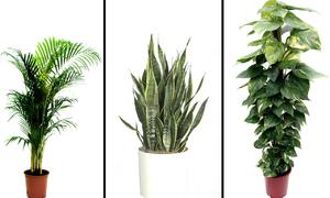 Các loại cây trồng trong nhà giúp thanh lọc không khí