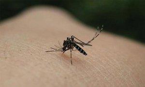 Vì sao bạn bị muỗi đốt nhiều hơn người khác?