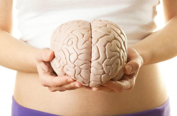 Bộ não thứ hai nằm ở bụng.