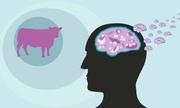 Việt Nam dừng sử dụng lô sinh phẩm y tế nghi nhiễm bệnh bò điên