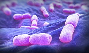 60 người Nam Phi tử vong vì nhiễm khuẩn viêm não qua thực phẩm
