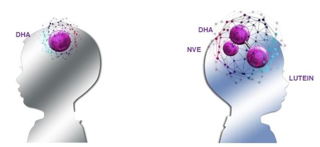 Kết nối não giúp tăng cường khả năng học hỏi của trẻ