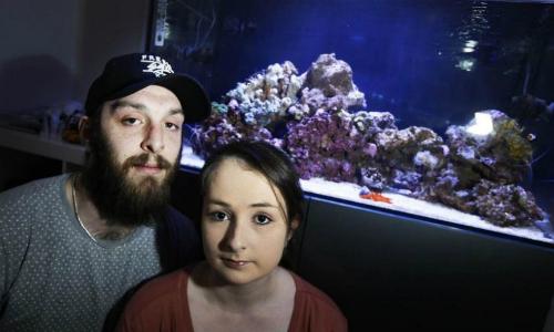 Chất độc nghi từ bể cá cảnh khiến cả gia đình ở Anh nhập viện