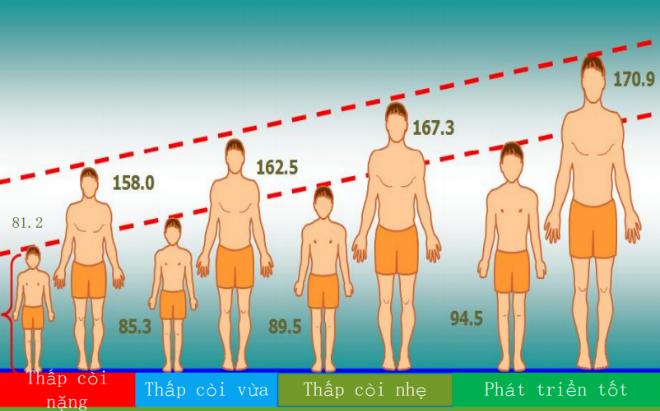 Theo nghiên cứu INCAP Oriente, chiều cao lúc 3 tuổi có ảnh hưởng lớn đến tầm vóc khi trưởng thành.