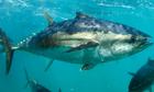 Làm sao để biết cơ thể bạn có dị ứng khi ăn cá ngừ?