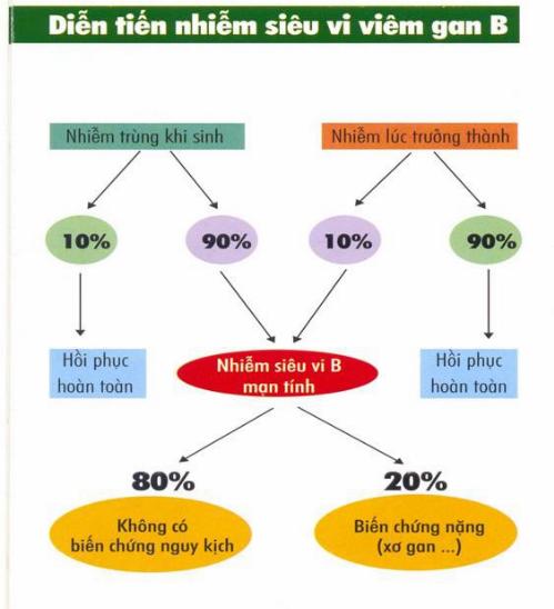 Việt Nam là nước có tỷ lệ người mắc viêm gan virus rất cao, nhiều trường hợp bị xơ gan chỉ vì chủ quan trước bệnh viêm gan virus.