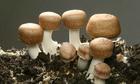 Những loại nấm, rong biển góp phần hỗ trợ điều trị ung thư