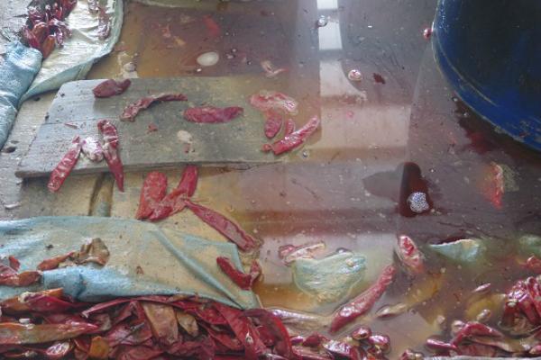 Ớt muối ngâm trong bể nhiều xác côn trùng ở TP HCM