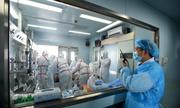 Trung Quốc giấu mẫu virus cúm H7N9