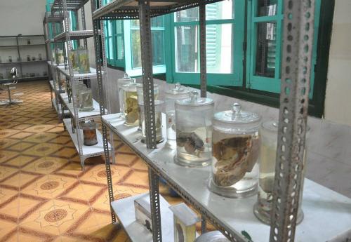 Các tiêu bản được đựng trongbình thủy tinh giúp sinh viên quan sát trực quan nhất về cấu trúc cơ thể người. Ảnh: V.C