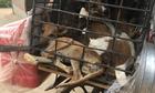 Ăn miếng thịt chó, hiểm họa khôn lường cho sức khỏe