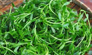 5 loại rau quê quen thuộc là bài thuốc quý