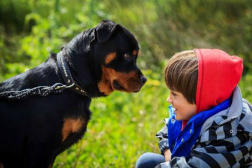 Những người bình tĩnh và ổn định ít có khả năng bị chó tấn công hơn những người sợ hãi. Ảnh: TheSprucePets