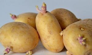 Rau củ quả mọc mầm có nguy hiểm khi ăn?