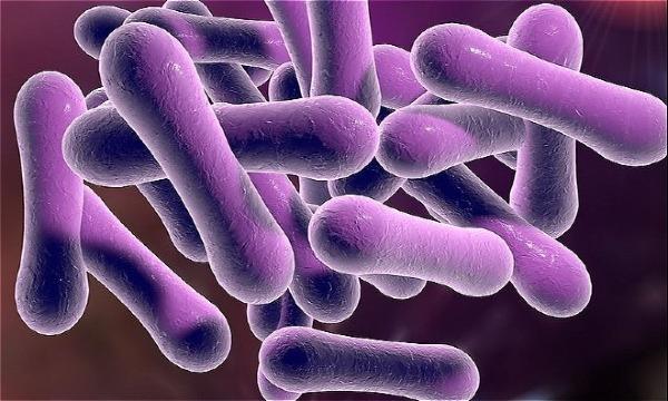 Vi khuẩn corynebacterium diphtheriae gây bệnh bạch hầu. Ảnh: homeopathyplus.