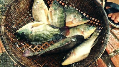 Cá rô là món ăn rất tốt cho người mới ốm dậy.