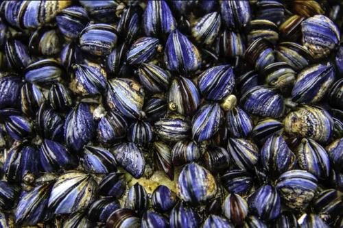 Vỏ sò xanh khiến nữ nghệ sĩ bị nhiễm độc kim loại nặng. Ảnh: Shutterstock.
