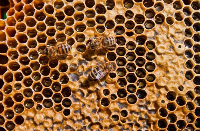 Nhiều người sẽ sợ hãi khi nhìn thấy vật thể có lỗ như tổ ong. Ảnh: TCE
