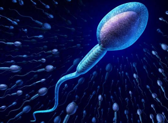Chỉ tinh trùng duy nhất mới vượt qua được giới hạn để đến được buồng trứng. Ảnh: Health