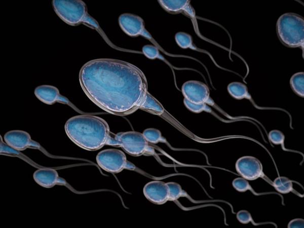 Sau 2 tiếng quan hệ, 90% tinh trùng sẽ chết và xác của chúng sẽ bị phân hủy sau 36 tiếng. Ảnh: Medical News Today