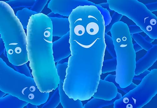 Các lợi khuẩn giúpbảo vệ hệ tiêu hóa.