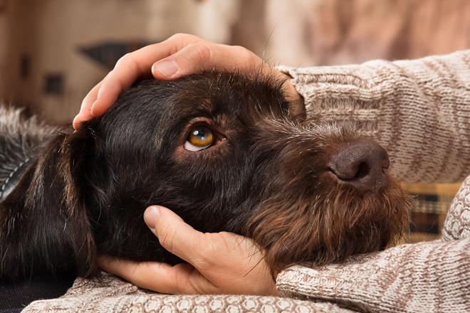 Kết quả hình ảnh cho chó nhạy cảm ăn gì
