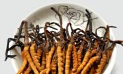 Đông trùng hạ thảo, vị thuốc quý hiếm giá nghìn USD
