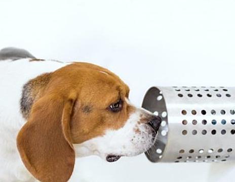 Chó sử dụng khứu giác phát triển cao để chọn ra mẫu máu của người bị ung thư với độ chính xác 97 %. Ảnh: Science daily