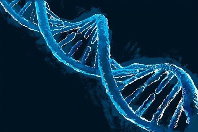 Một số người có gene MC4R hoạt động trong cơ thể, ngăn chặn sự thèm ăn.