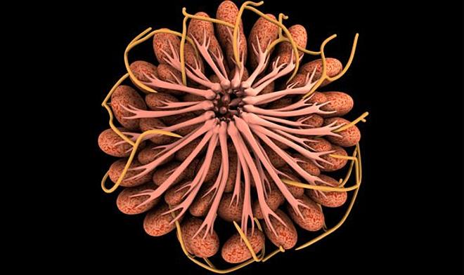 Bức ảnh cho thấy các cơ ngực và các tuyến sữa bao quanh núm vú được chia thành các ống dẫn. Ảnh: Daily Express
