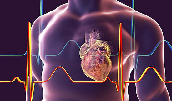 Trái tim là bộ phận quan trọng và khỏe nhất trong cơ thể. Ảnh: Express