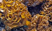 Khả năng hỗ trợ ngừa ung thư của hoạt chất Fucoidan ở rong nâu
