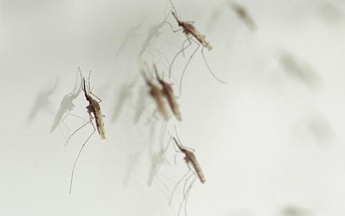 Ảnh: Ridley Scott Associates/Malaria Must Die.