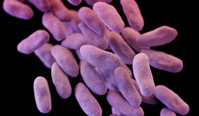 Các tế bào enterobacteriaceae kháng carbapenem. Ảnh: SCMP