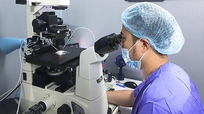 Bác sĩ tiêm tinh trùng vào bào tương trứng để tạo thành phôi. Ảnh: V.T
