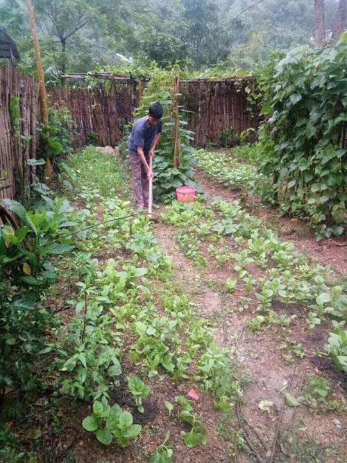Ông Thường làm vườn hàng ngày như cách rèn luyện sức khỏe. Ảnh: Cao Thảo.