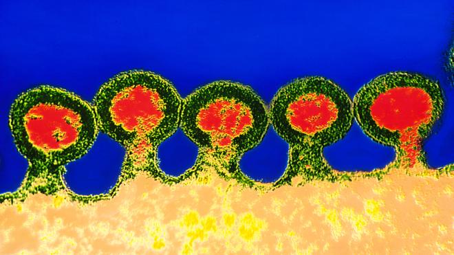 Thụ thể CCR5 giúp virus HIV xâm nhập các tế bào miễn dịch. Ảnh: Wired