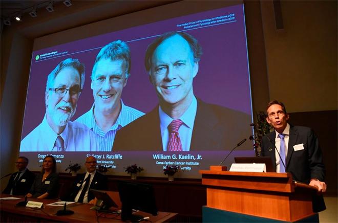 Ủy ban Nobel công bố ba nhà khoa học đạt giải Nobel Y sinh 2019. Ảnh: New York Times.